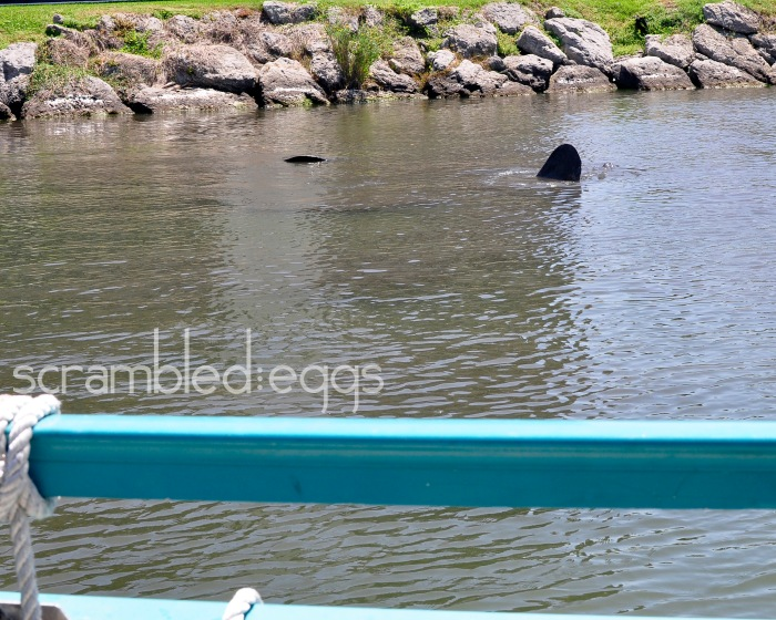 You can't see much here, but there are at least two manatee couples in the water getting it on!