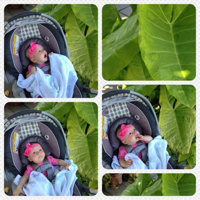 Sabine discovers Elephant Ears at The Gardens of Wave Hill in Riverdale, NY.